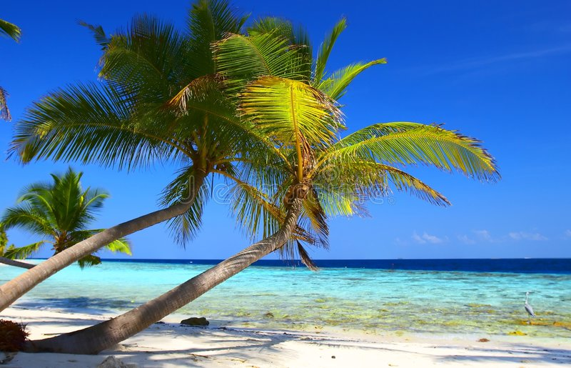 PHENOMENAL BEACH WITH PALM TREES AND BIRD stock image