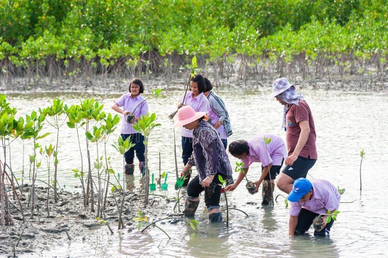 Phetchaburi Tailândia, o 9 de junho: Árvore nova da planta tailandesa do estudante em d foto de stock