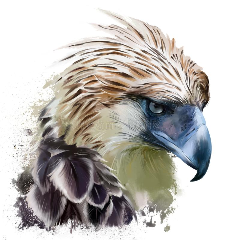 The Philippine harpy, head. Watercolor drawing vector illustration