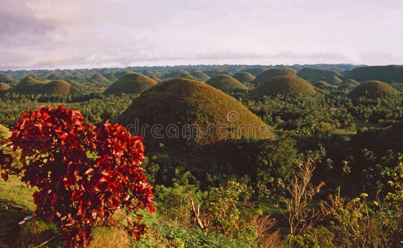 Philippinen-Insel: Die UNESCO-Welterbschokoladenhügel in Bohol stockfotografie