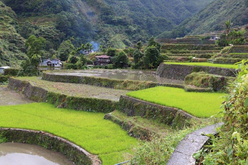 Philippinen-Reisfelder lizenzfreie stockbilder