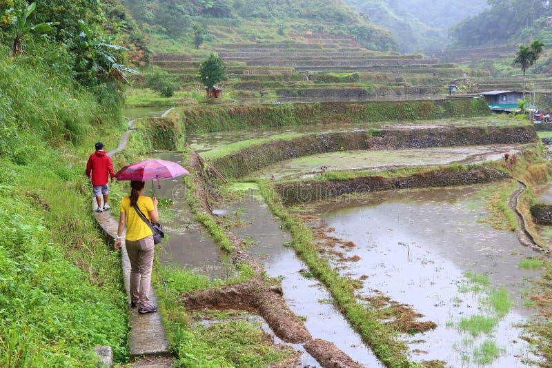 Philippinen-Reispaddys stockfoto
