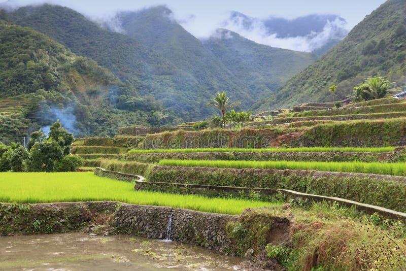 Philippinen-Reispaddys lizenzfreie stockfotos