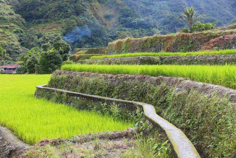 Philippinen-Reisterrasse lizenzfreie stockbilder