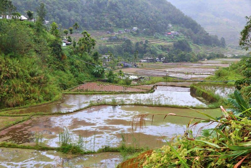 Philippinen-Reisterrasse stockbilder
