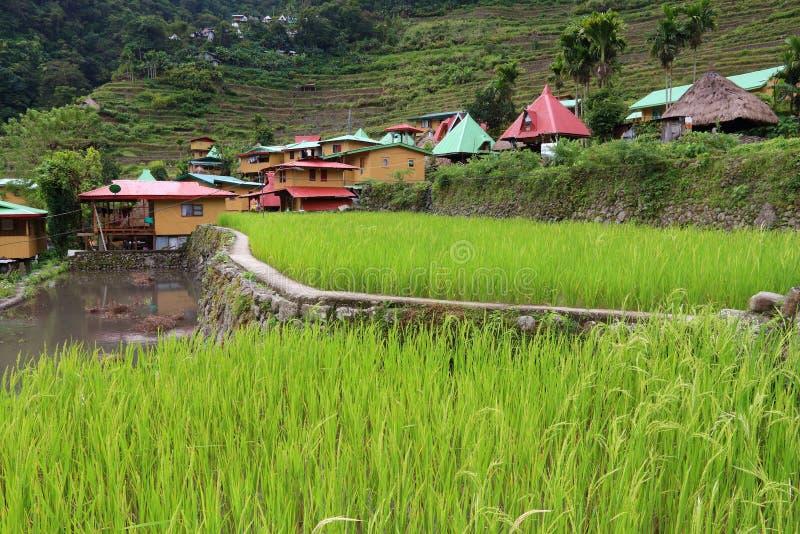 Philippinen-Reisterrassen stockfoto