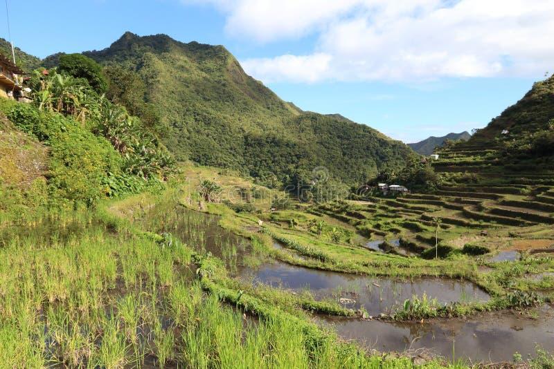 Philippinen-Reisterrassen - Reisanbau in Batad-Dorf lizenzfreie stockfotos