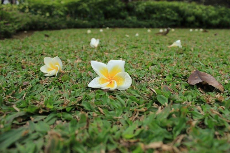 Philippines city Manila. Historic park in the city of Manila, Philippines, flowers stock photos