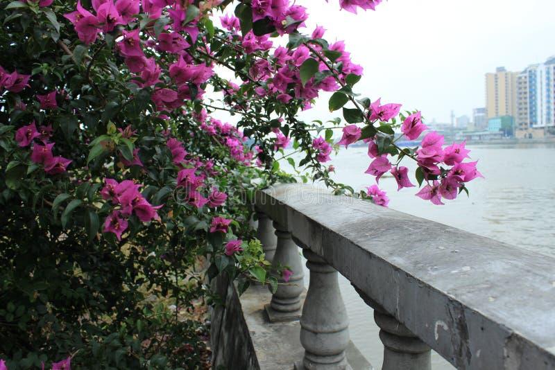 Philippines city Manila. A walking park, trees in bloom. Philippines city Manila royalty free stock photos