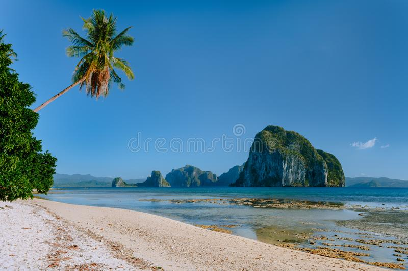 Philippines natural scenery beach at low tide, palm tree and amazing Pinagbuyutan island in background. Exotic nature royalty free stock photography