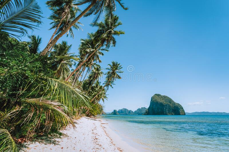 Philippines, Palawan, El Nido beach at low tide, palm tree and amazing Pinagbuyutan island in background. Exotic. Vacation holiday travel concept stock photography