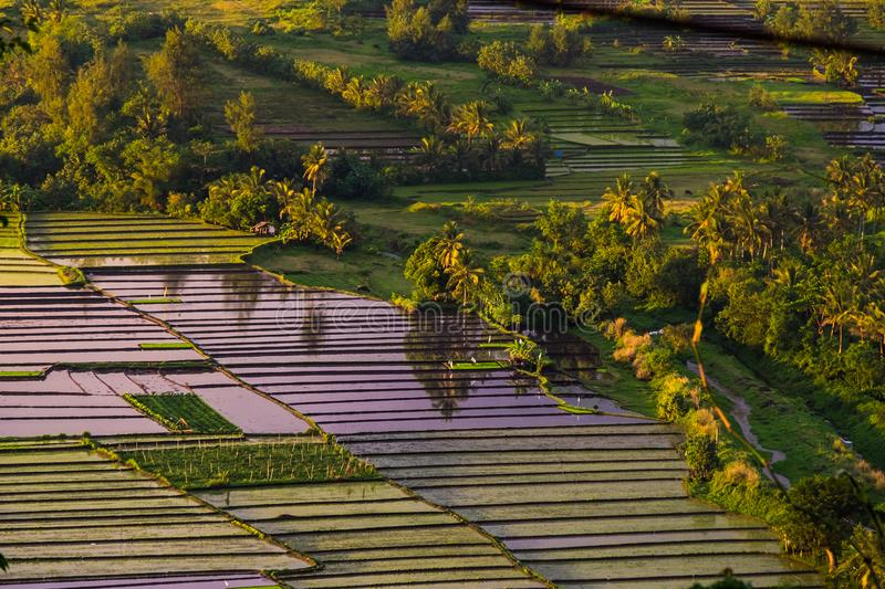 Philippines rice terraces royalty free stock photos