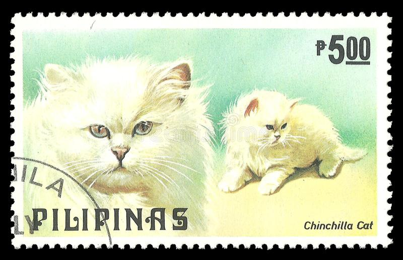 Cats, Persian Chinchilla. Philippines - stamp 1979, Memorable issue Fauna, Series Dogs and Cats, Persian Chinchilla, Felis silvestris catus royalty free stock images