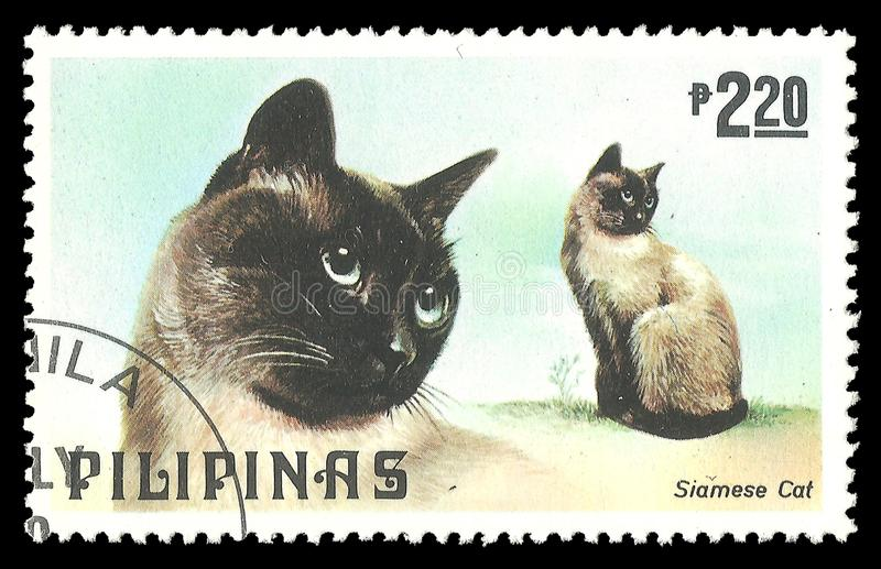 Cats, Siamese Cat. Philippines - stamp 1979, Memorable issue Fauna, Series Dogs and Cats, Siamese Cat, Felis silvestris catus royalty free stock photo