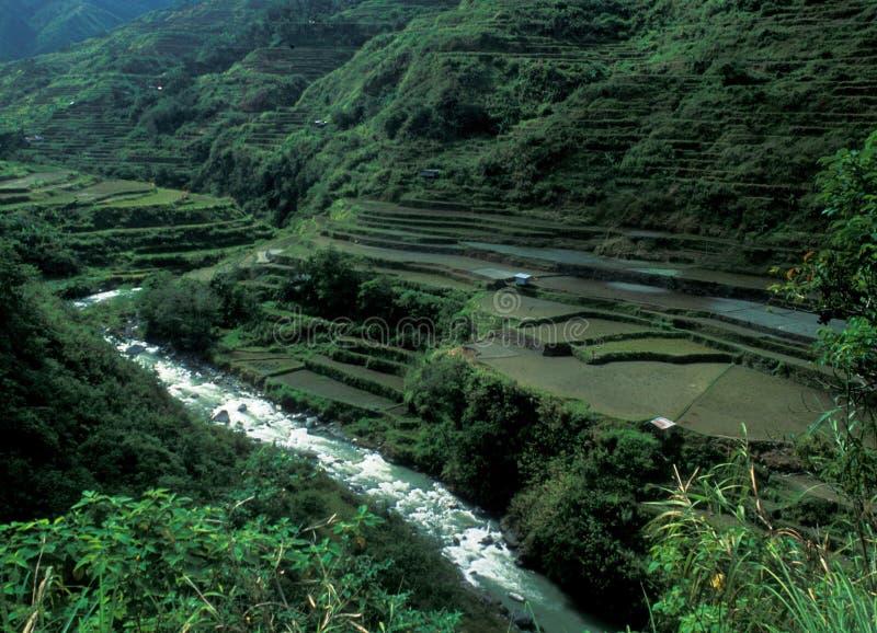 Philippines: The Unesco Wortd Heritage Banaue Rice terraces stock photo