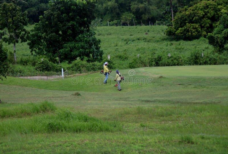 Philippinische Grasschneider, die auf dem Gebiet in den Philippinen arbeiten lizenzfreie stockfotos