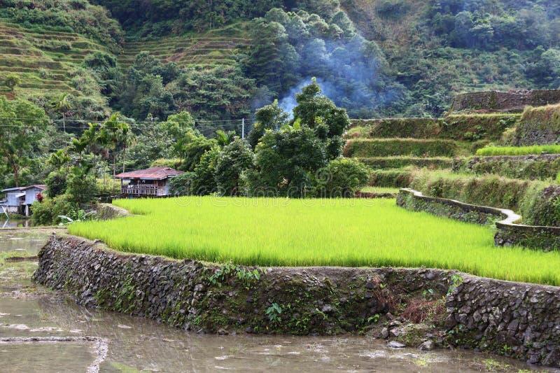 Philippinische Reisterrasse lizenzfreies stockbild