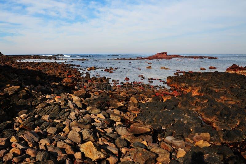 Phillip Island Coast imagens de stock
