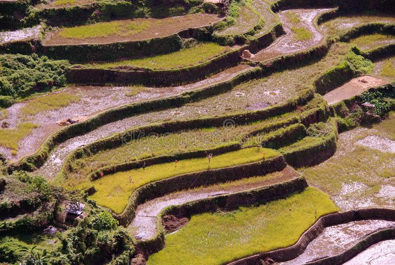 Download Phillippines stock photo. Image of ecology, field, luzon - 12199302