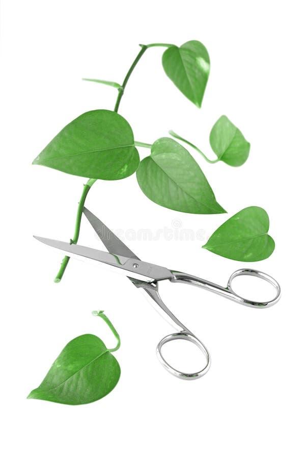 Philodendron lizenzfreies stockfoto