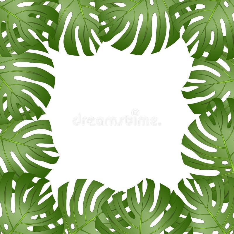 Philodendron Monstera Leaf Border isolated on White Background. Vector Illustration.  stock illustration