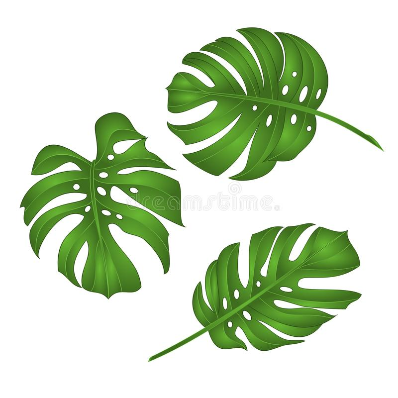 philodendron tropical jungle leaves isolated on white background vector illustration editable. Black Bedroom Furniture Sets. Home Design Ideas