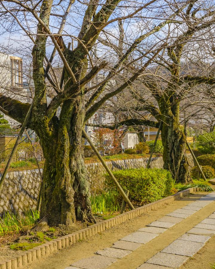 Philosopher Path, Kyoto, Japan. KYOTO, JAPAN, JANUARY - 2019 - Beautiful street winter scene at famous philosopher path, kyoto, japan stock photo