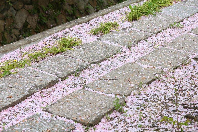 Philosopher's Path, Kyoto. Fallen cherry blossoms on Philosopher's Path in Kyoto, Japan stock photos