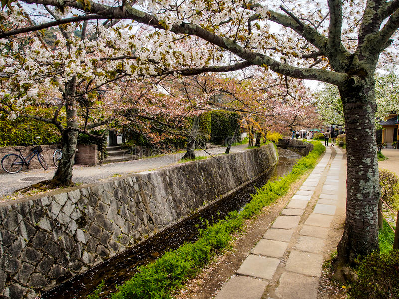 Philosopher's path, Kyoto, Japan 1. Philosopher's path with cherry blossom, Kyoto, Japan royalty free stock image
