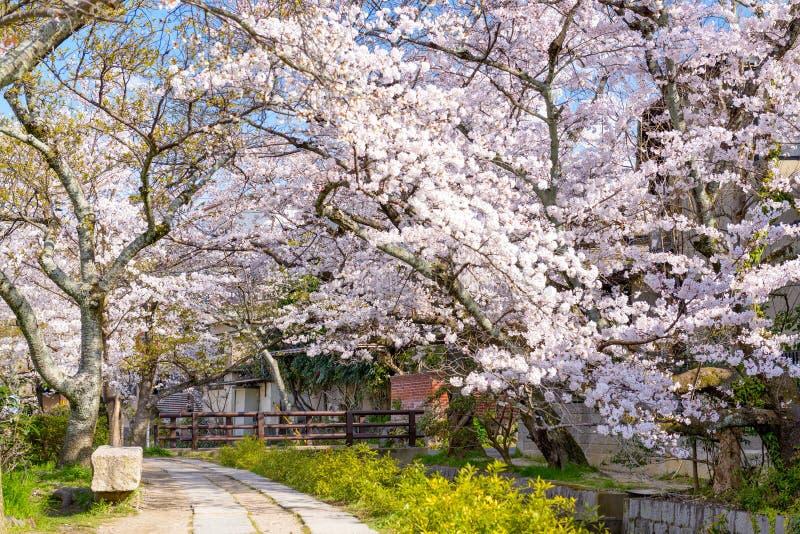 Philosopher's Walk in Kyoto. Kyoto, Japan at Philosopher's Walk in the Springtime stock image