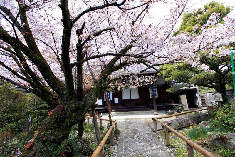 Philosopher's Walk,Kyoto. Spring cherry flowers in bloom,Philosopher's Walk in Kyoto, Japan stock photos