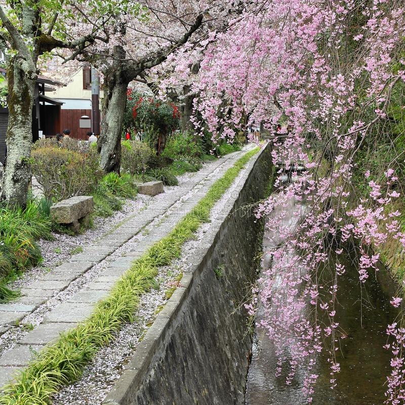 Philosophers Path, Kyoto. Kyoto, Japan - Philosophers Path, a hiking way famous for its cherry blossom (sakura stock images