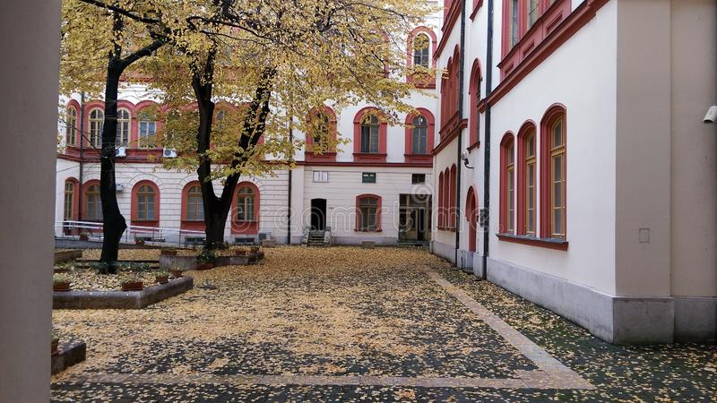 Philosophy college. Yard in the fall stock image