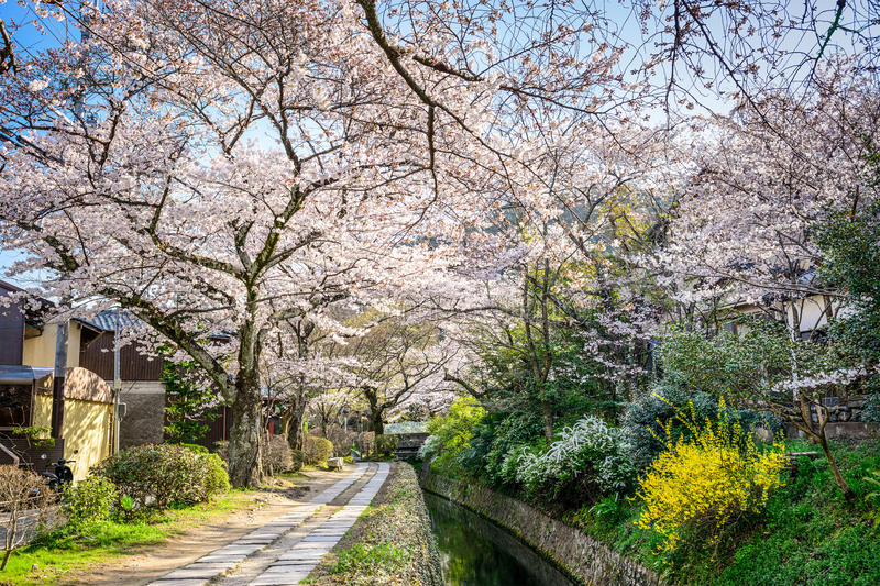 Philospher's Path in the Spring. Kyoto, Japan at Philosopher's Walk in the spring season stock photo