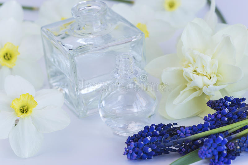Phiolen mit Blumen des ätherischen Öls und der Narzisse und des Muscari stockfotografie