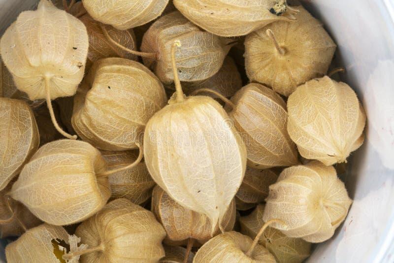 Phisalis-Fruchtmakrodetail und -ansicht von oben lizenzfreies stockbild