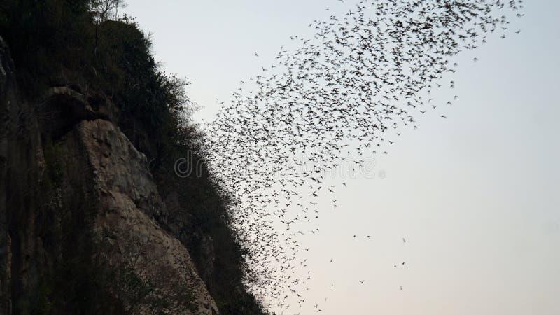 phnom-sampeau-bat-cave-near-battambang-c
