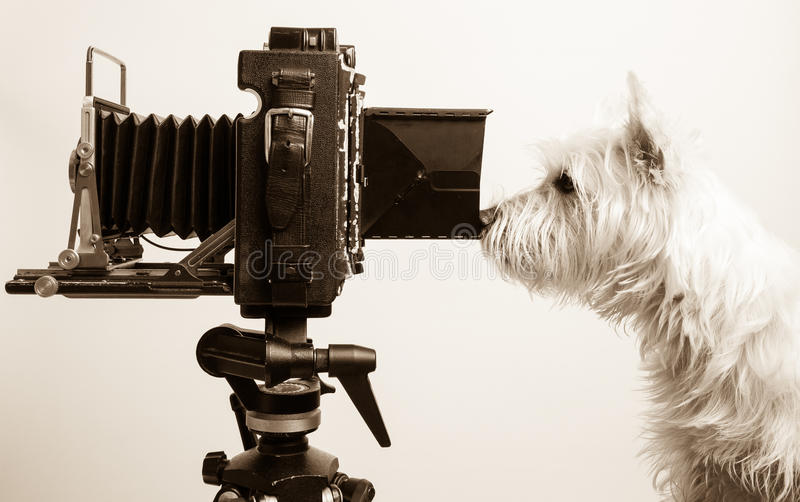 Download Pho Dog Grapher At Work In Photography Studio Stock Images - Image: 24636294