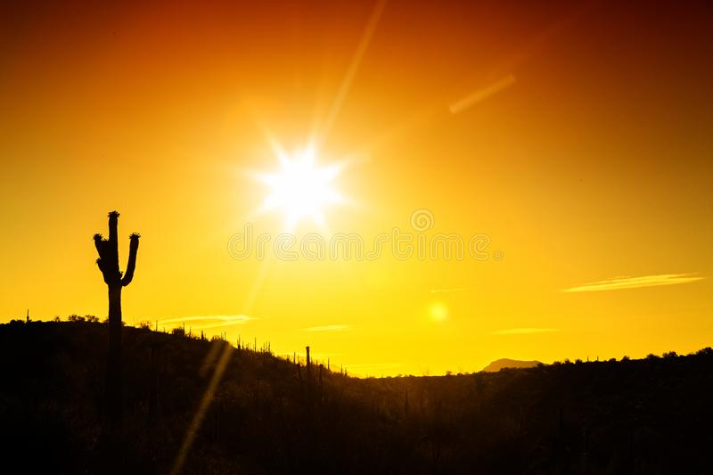 Phoenix Arizona Desert Sunset Silhouette. Silhouette of single saguaro cactus in the Sonoran Desert of Arizona with copy space in golden sunrise or sunset royalty free stock photography