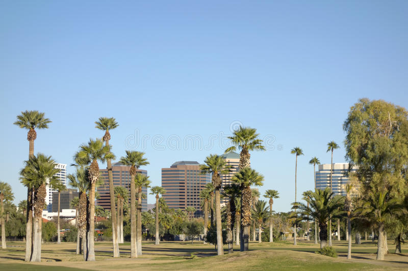Phoenix Downtown, AZ. View at Phoenix Downtown through tall palms of Encanto Park, Arizona; Copy space in clear blue sky stock image