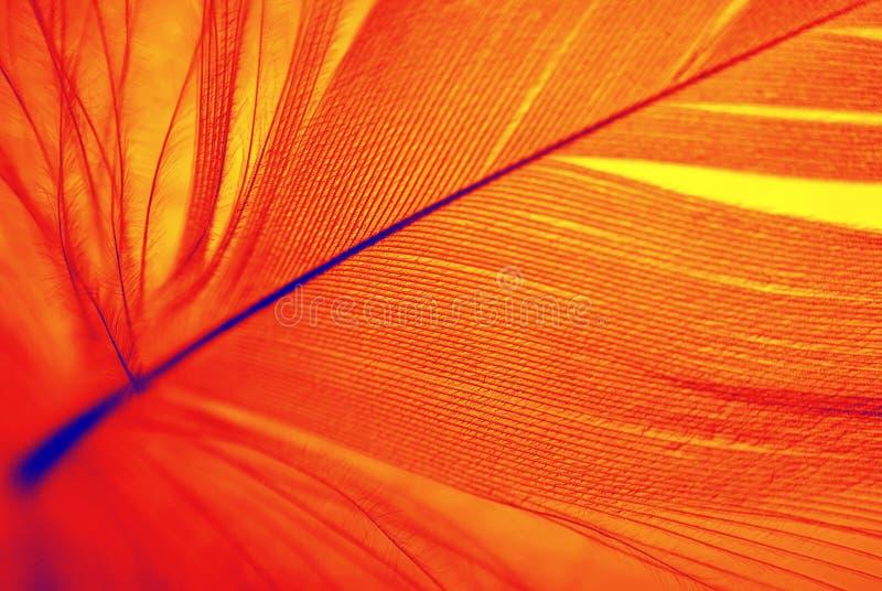 Phoenix-Feder lizenzfreies stockfoto