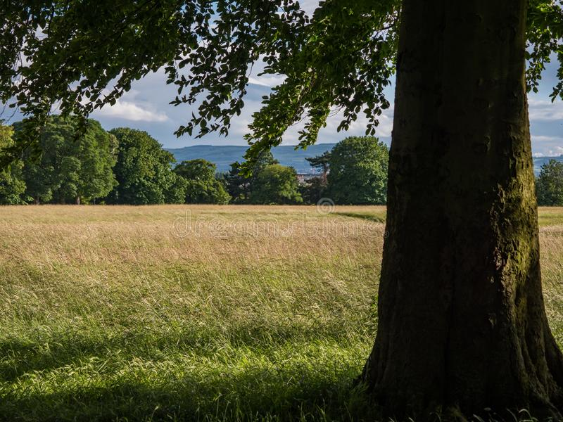 Phoenix park, Dublin Widok pod popiółu drzewem nad trawiastą łąką w lecie fotografia royalty free