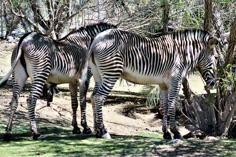 Phoenix Zoo, Arizona Center for Nature Conservation, Phoenix, Arizona, United States stock photography