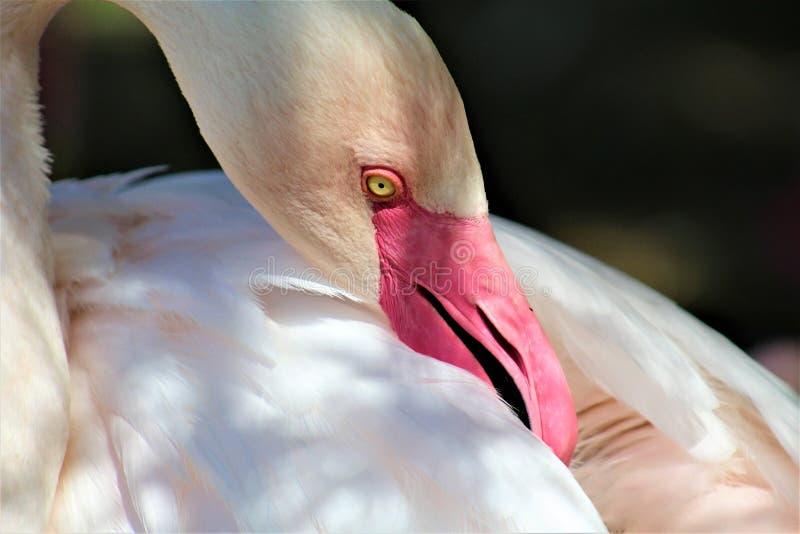 Phoenix zoo, Arizona mitt för naturvård, Phoenix, Arizona, Förenta staterna royaltyfria bilder