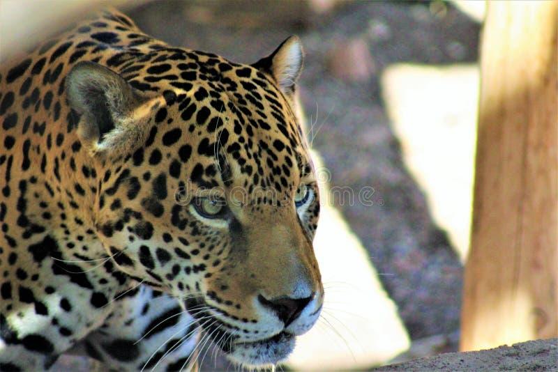 Phoenix zoo, Arizona mitt för naturvård, Phoenix, Arizona, Förenta staterna royaltyfria foton