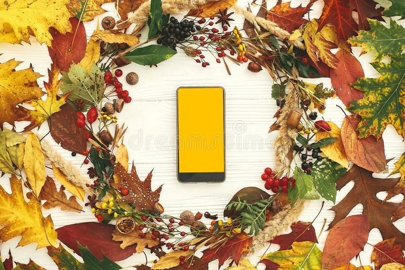 Phone with empty yellow screen in autumn wreath of fall leaves, red berries, acorns, anise, nuts, autumn flowers on white wood. stock photo