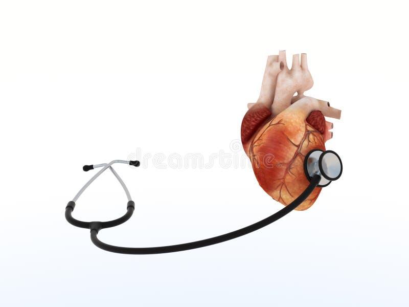 Phonendoscope listens to human heart royalty free illustration