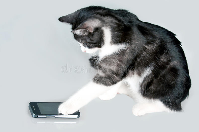 Phoning cat royalty free stock photography