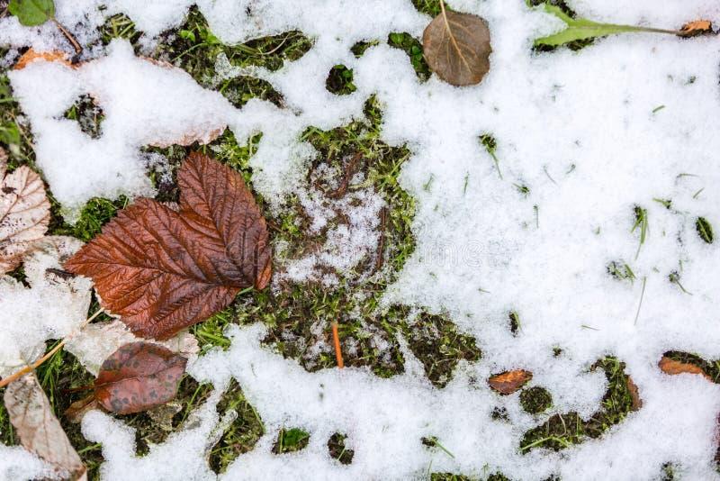 Phot abstrait de la première neige tombée au sol photographie stock