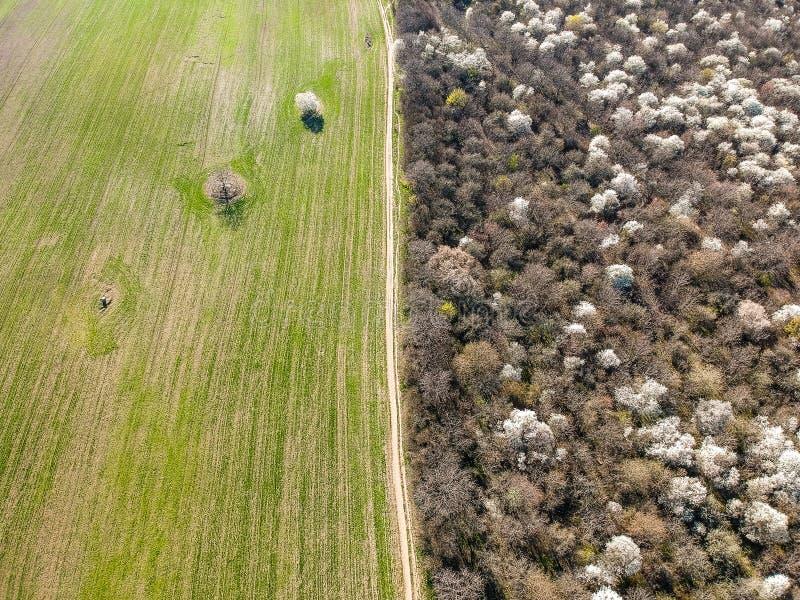 Photo aérienne d'allée avec les arbres de floraison et le champ vert photographie stock libre de droits